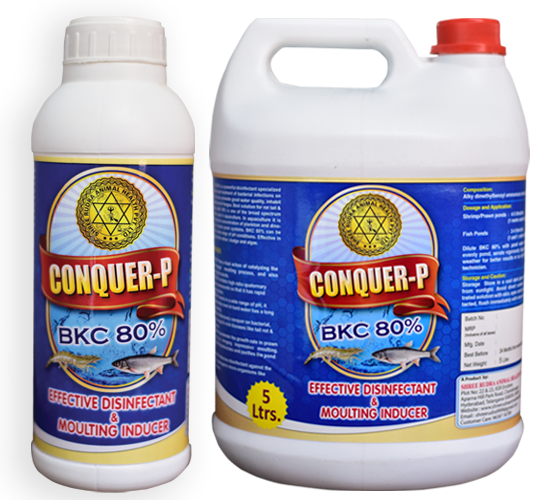 Conquer-P-BKC